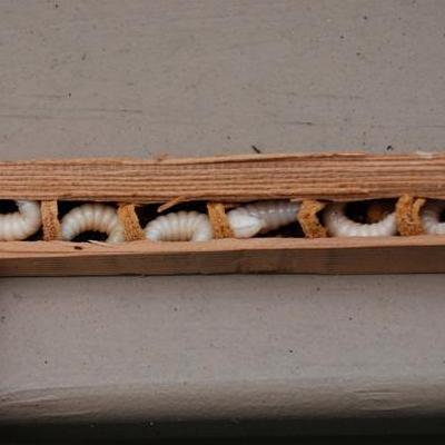 Termite Inspection In Columbus Ohio Schedule Now 1 800