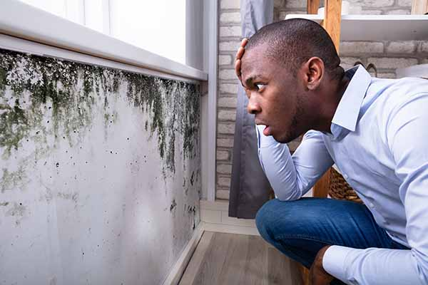 Mold home Inspections