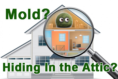 Mold hiding in the attic? Call for a home inspection!