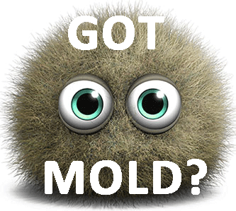Got mold? Call a mold inspector in Columbus Ohio now!
